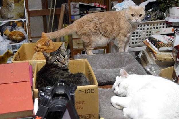 2019年8月25日の我が家の4匹の猫たち勢揃い