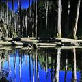 Photos: 忘憂森林
