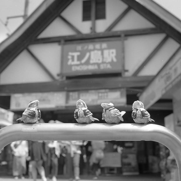 写真: 着たきり雀