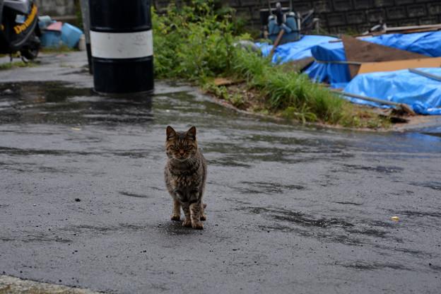 田代島初めての猫