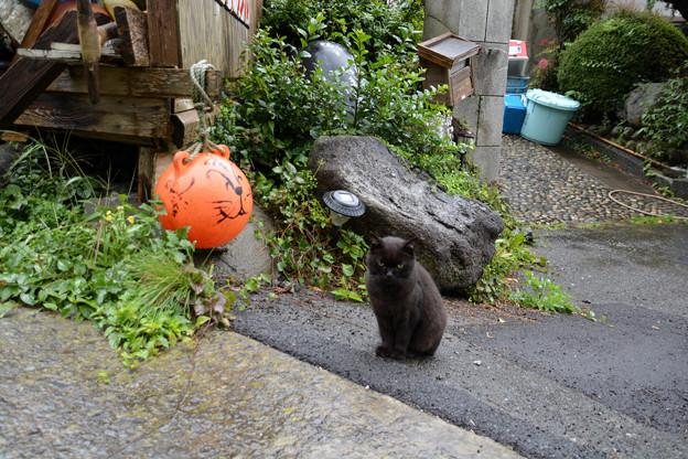 田代島の黒猫