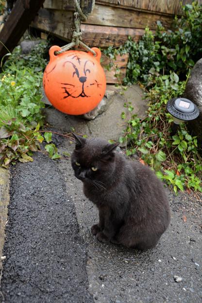 田代島の黒猫2