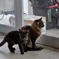 田代島待合所の猫2