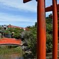 高山稲荷神社千本鳥居2