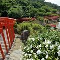 高山稲荷神社千本鳥居3