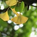 緑から黄色へ秋を感じて