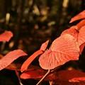 Photos: 秋色の森