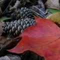 写真: 森の中の小さな秋