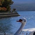 swanの秋
