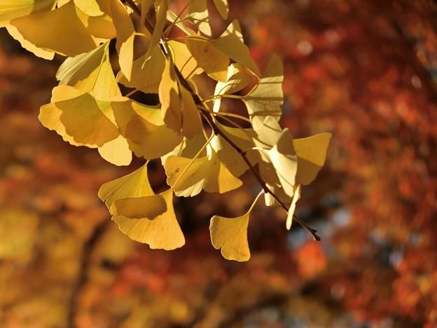 写真: 黄色と赤の共演