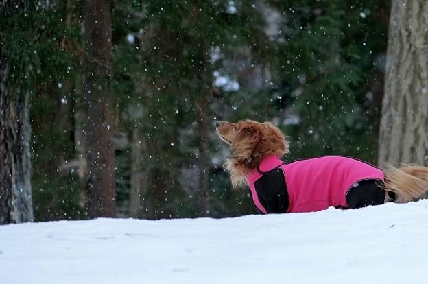写真: 雪の香りを楽しむ~♪