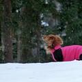 Photos: 雪の香りを楽しむ~♪
