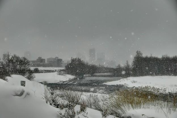 写真: 雪の豊平川・自然のソフトフォーカス~♪