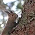 写真: 春間近のエゾリスくん~♪