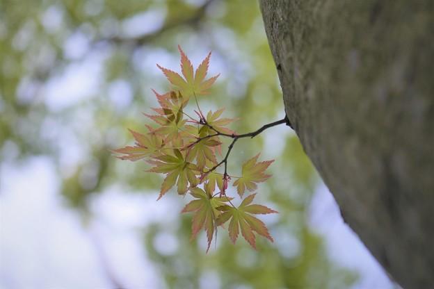 ただいま秋の準備中
