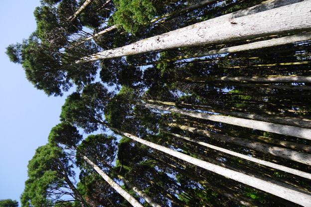 写真: いにしえの森