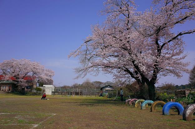 小川小学校 旧下里分校(2016.4)