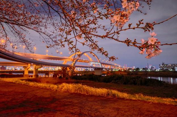 五色桜大橋(HDR)1@東京都足立区(2019.3)