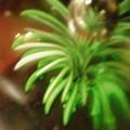 写真: aozora 49