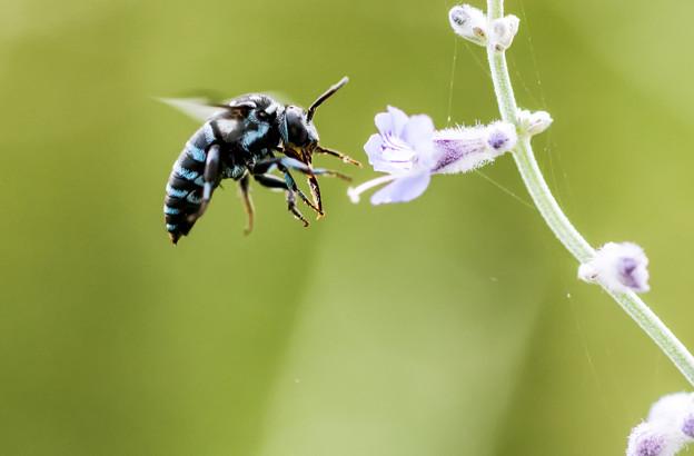 公園花壇の昆虫 1