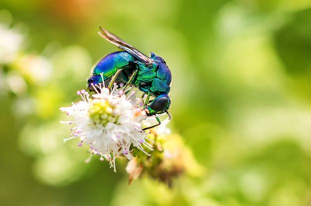 Photos: 公園花壇の昆虫 3