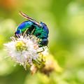 公園花壇の昆虫 3