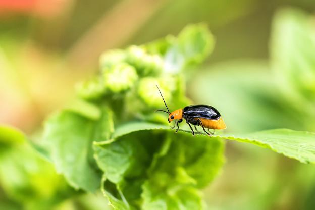 公園花壇の昆虫 4