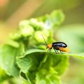 Photos: 公園花壇の昆虫 4