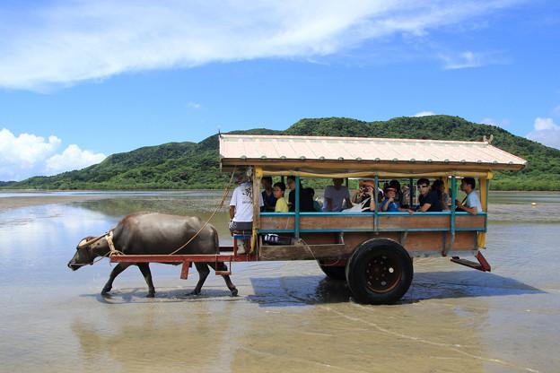 由布島に渡る水牛車(2019/07/31 西表島)