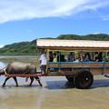 Photos: 由布島に渡る水牛車(2019/07/31 西表島)