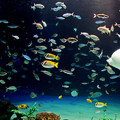 サンシャイン水族館 パノラマ大水槽