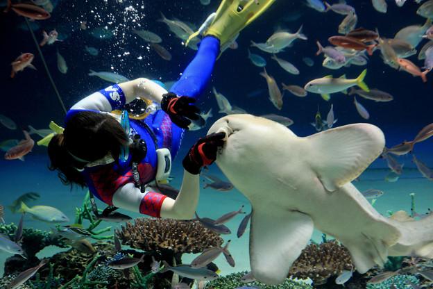 サンシャイン水族館 トラフザメ食事タイム