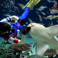 Photos: サンシャイン水族館 トラフザメ食事タイム