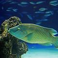 写真: サンシャイン水族館 ナポレオン