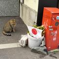 Photos: 10連休で 暇な猫? 何をすれば良いのかニャン~~~