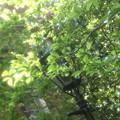 Photos: 丸の内ブリックスクエア中庭 3 5月1日 プロ ソフトン-A使用