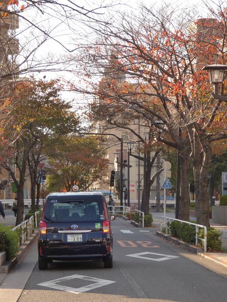 秋の立会道路の桜並木(2)