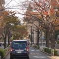 Photos: 秋の立会道路の桜並木(2)