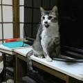 写真: 「舞台あいさつ」をする猫…!?