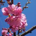写真: 春の風