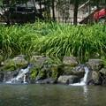 写真: 白滝公園の小さな滝