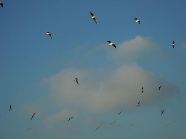 群れて飛ぶ