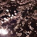 Photos: 大阪城にて夜桜