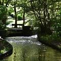 Photos: とある緑地の一風景