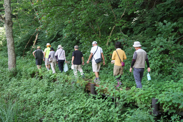 2173 湿原周縁は木陰のチップ歩道