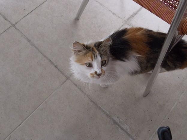 5/2マルディンホテルのレストランでおねだりする猫