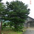 写真: CIMG5871