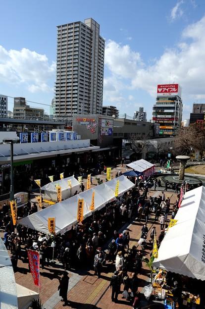 コーベ カメリア ソサエティ 椿展 2018/02/11 奄美大島瀬戸内町物産展