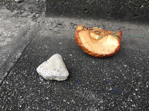 リンゴと石