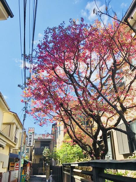 Photos: 空と花と色と